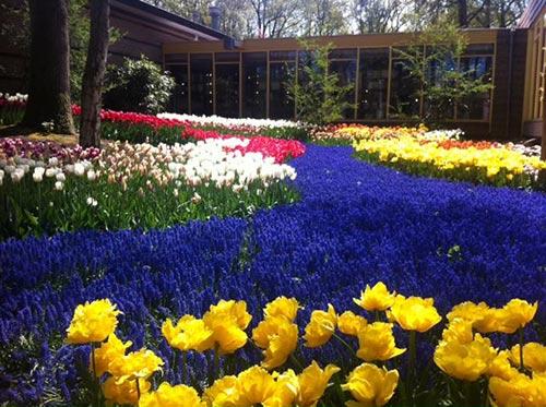 thu minh ve que chong ngam hoa tulip - 9