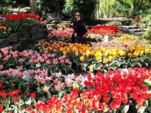 thu minh ve que chong ngam hoa tulip - 2