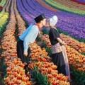 Đi đâu - Xem gì - Những thiên đường tình yêu tại Hà Lan