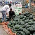 Mua sắm - Giá cả - Dưa hấu bán 1.000 đồng/kg - Nông dân đắng lòng