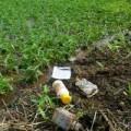Mua sắm - Giá cả - Rau muống ngâm nước thải, 'ướp' thuốc độc ở Hà Nội