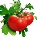 Sức khỏe - Cà chua hữu cơ Mỹ nhiễm khuẩn salmonella