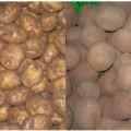 Tin tức - Phân biệt khoai tây Trung Quốc và khoai tây Đà Lạt