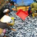 Mua sắm - Giá cả - Thủy sản Việt Nam được ưa chuộng ở Úc