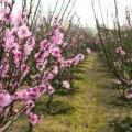 """Nhà đẹp - 7 loài cây """"cầu an"""" nên trồng"""