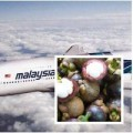 Tin tức - Lô măng cụt trên MH370 giấu thuốc nổ?