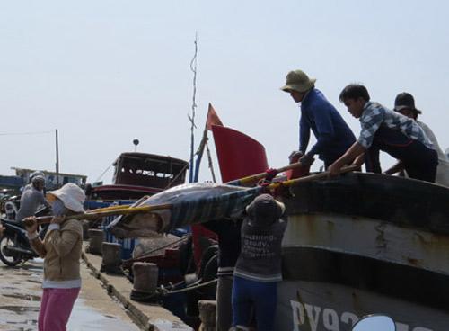 ca ngu viet nam: san luong cao, dang cap thap - 1
