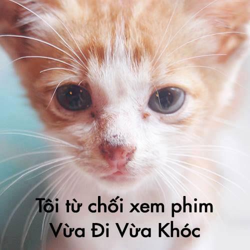 """""""phan doi vua di vua khoc thi dung an thit"""" - 3"""