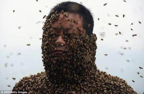 "soc: 46 van con ong bu kin nguoi ong ""khoa than"" - 1"