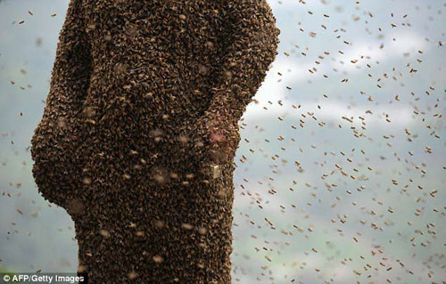 "soc: 46 van con ong bu kin nguoi ong ""khoa than"" - 3"