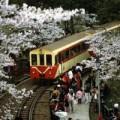 Đi đâu - Xem gì - Đi xe lửa giữa rừng đào ở A Lý