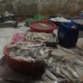 Tin tức - Bên trong xưởng ngâm tẩm mực thối ở Hà Nội