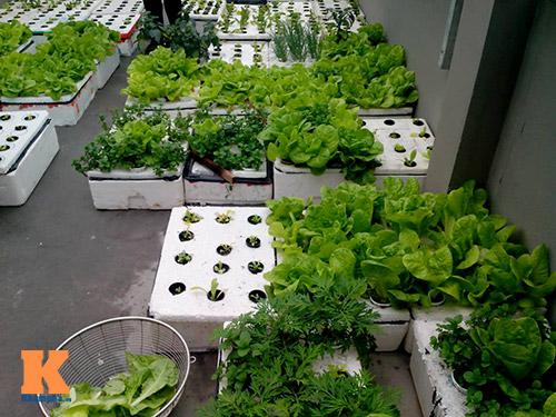 Ngắm vườn rau trên cao của dân Thủ đô-13