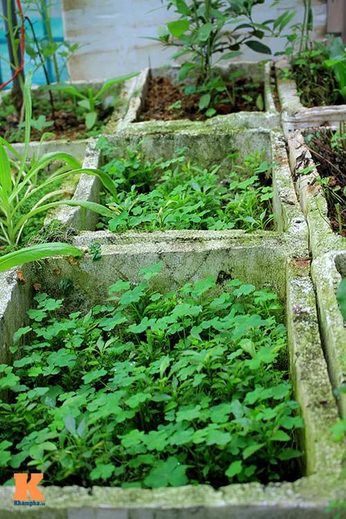 Ngắm vườn rau trên cao của dân Thủ đô-6