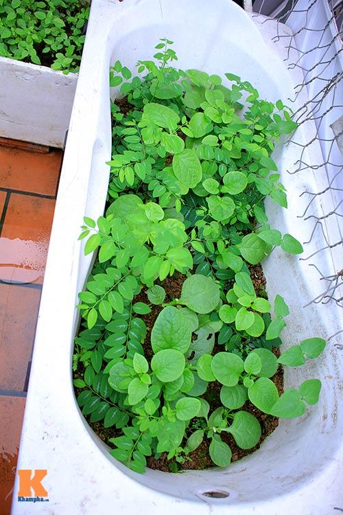 Ngắm vườn rau trên cao của dân Thủ đô-10