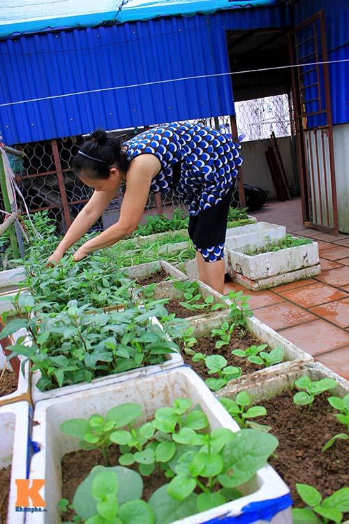 Ngắm vườn rau trên cao của dân Thủ đô-14