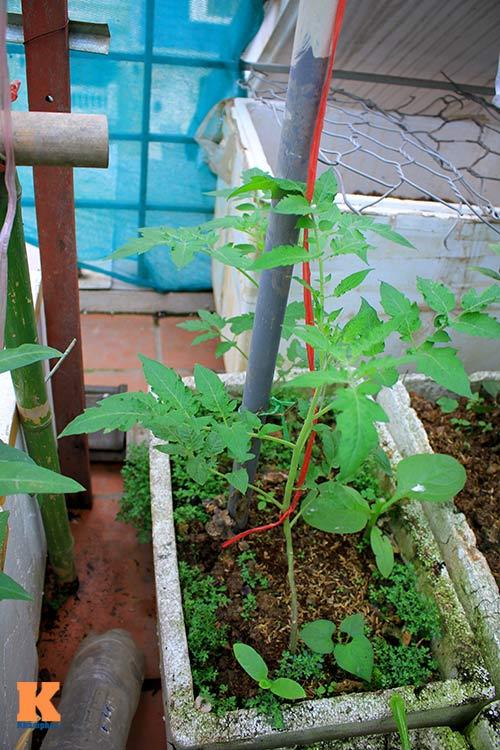 Ngắm vườn rau trên cao của dân Thủ đô-11