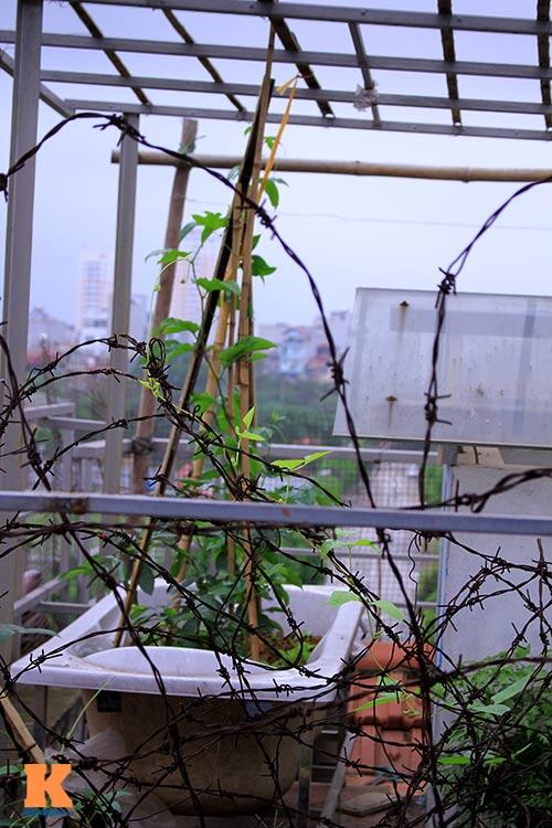 Ngắm vườn rau trên cao của dân Thủ đô-12