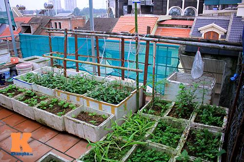 Ngắm vườn rau trên cao của dân Thủ đô-2