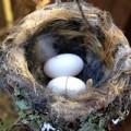 Xem & Đọc - Chiêm ngưỡng chu kỳ sống của chim ruồi