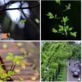 Tin tức - Hà Nội đẹp lạ mùa thay lá