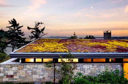Trồng vườn trên mái làm mát nhà phố-6