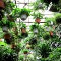 Nhà đẹp - 11 cây cảnh đẹp làm sạch không khí