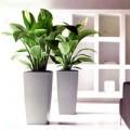 Nhà đẹp - 10 loại cây cảnh dễ trồng trong nhà