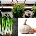 Nhà đẹp - 8 loại rau củ lý tưởng trồng trong nhà