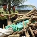 Mua sắm - Giá cả - Chặt gỗ trắc non bán cho Trung Quốc