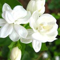 8 kieng ky loi vao: quen la ruoc hoa! - 15