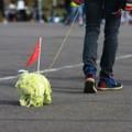 Xem & Đọc - Giới trẻ Trung Quốc dắt cải thảo đi... dạo phố