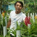 Mua sắm - Giá cả - Tay trắng trồng phong lan lạ, thu nửa tỷ đồng mỗi năm