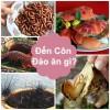 Bếp Eva - Đặc sản Côn Đảo: Hoang sơ mà hấp dẫn