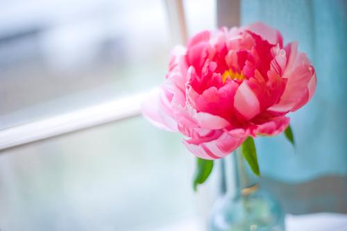 Loài hoa phú quý tốt lành cho ngôi nhà bạn