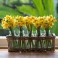Nhà đẹp - 6 loài hoa phú quý, tốt lành cho nhà đẹp