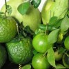 Sức khỏe - Cân bằng nội tiết tố qua ăn uống