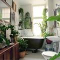 Nhà đẹp - 5 cây cảnh đẹp, dễ chăm cho phòng tắm
