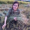 Làng sao - Huyền Anh - Bà Tưng bất ngờ về quê gặt lúa