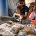 Mua sắm - Giá cả - Đi chợ chuột lớn nhất miền Tây