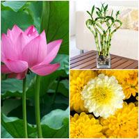 hoa canh phong ngu giup ban ngon giac - 5