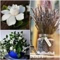 Nhà đẹp - Hoa cảnh phòng ngủ giúp bạn ngon giấc