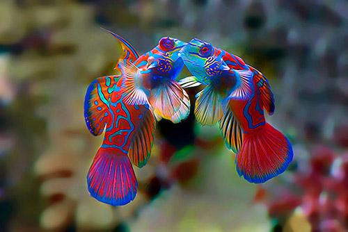 Những nụ hôn rực rỡ trong thế giới động vật-1