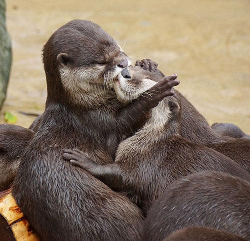 Những nụ hôn rực rỡ trong thế giới động vật-9