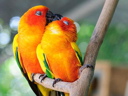 Những nụ hôn rực rỡ trong thế giới động vật-10