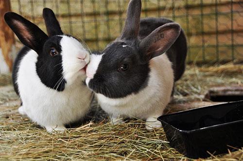 Những nụ hôn rực rỡ trong thế giới động vật-12