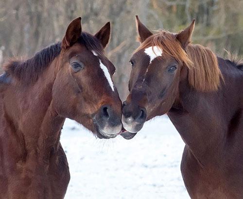 Những nụ hôn rực rỡ trong thế giới động vật-14