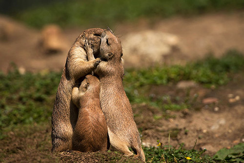 Những nụ hôn rực rỡ trong thế giới động vật-3