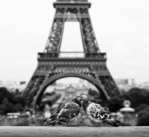 Những nụ hôn rực rỡ trong thế giới động vật-15