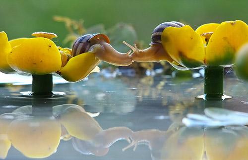 Những nụ hôn rực rỡ trong thế giới động vật-4
